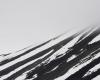 056 Snow Zebra