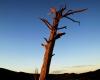 086-bunyaroo-tree