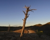 006-lone-pine
