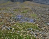 060 Svalbard Flora