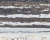 063 Glacial Lines