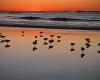 022-seagulls-at-nobbys