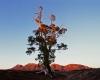 103-cazneaux-tree