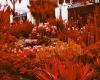 204 Red Gardens