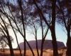 221 Uluru Hiding