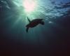 229 Sea Turtle Silhouette