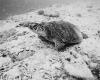 232 Turtle Watching