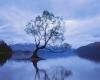 243 Wanaka Reflections