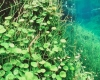 260 Freshwater Garden