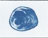 010 Blue Rings