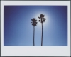 014 Palms